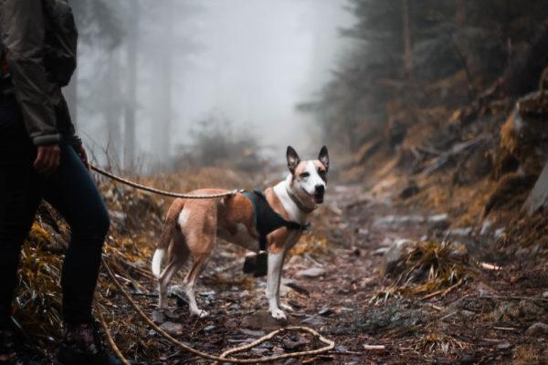 Chien de Léa Taroux, comportementaliste canin à St Dié