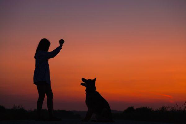 Silhouette de chien et son maître sur fond de couché de soleil