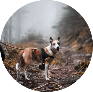 Icône ronde chien de Léa Taroux