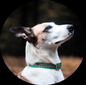 Laya, chien de Léa Taroux, Comportementaliste canin à St Dié